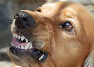 Tips on What to do After a Dog Bite